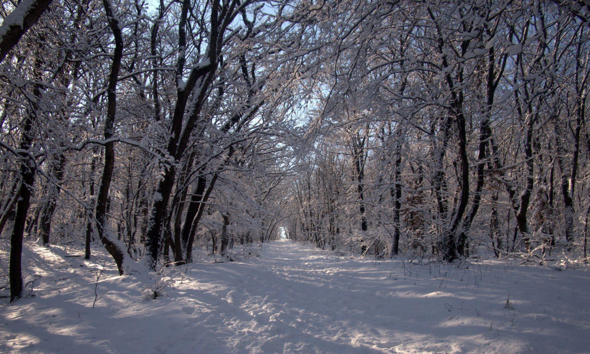 Pilis Trail